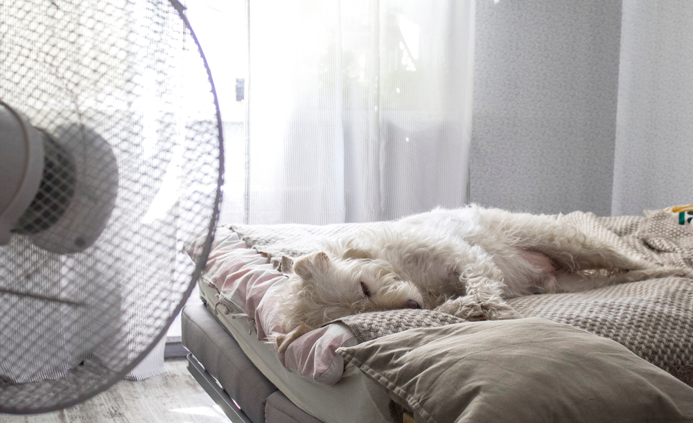 How to Improve Your Sleep in the Summer